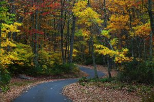 800px-fall-foliage-wv-winding-country-road_-_west_virginia_-_forestwander